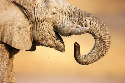 Wild Animals Photograph - Elephant Drinking by Johan Swanepoel