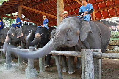 Elephants Photograph - Elephant Greeting - Maesa Elephant Camp - Chiang Mai Thailand - 01133 by DC Photographer