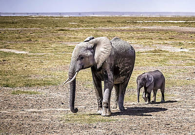 Mother Elephant Photograph - Elephant Mom And Baby by Marion McCristall