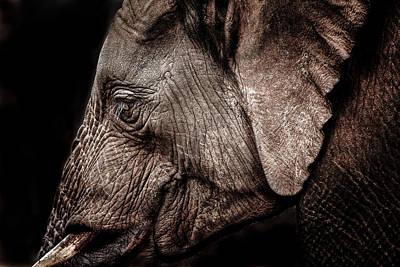 Elephant Profile Print by Mike Gaudaur