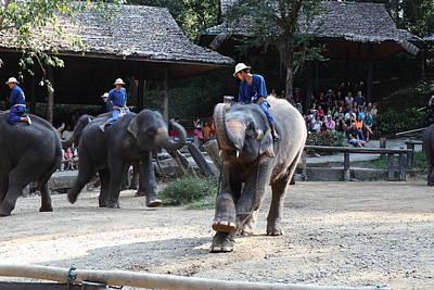 Elephant Show - Maesa Elephant Camp - Chiang Mai Thailand - 011319 Print by DC Photographer