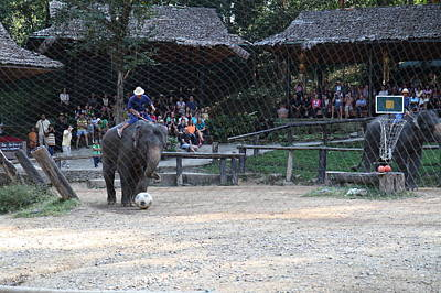 Show Photograph - Elephant Show - Maesa Elephant Camp - Chiang Mai Thailand - 011325 by DC Photographer