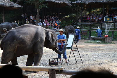 Camp Photograph - Elephant Show - Maesa Elephant Camp - Chiang Mai Thailand - 011340 by DC Photographer