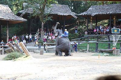 Elephant Show - Maesa Elephant Camp - Chiang Mai Thailand - 011353 Print by DC Photographer