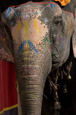 Elephants Amber Fort Jaipur Rajasthan Print by Tom Norring
