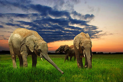 Elephants At Sunset Print by Jaroslaw Grudzinski