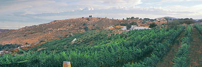 Elevated View Of Vineyard At Sunrise Print by Panoramic Images