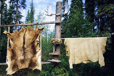 Elk And Moose Hides Stretched And Hang Print by Angel Wynn