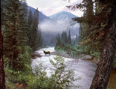 Elk Crossing 2 Print by Leland D Howard