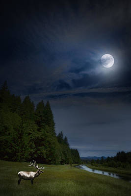 Elk Under A Full Moon Print by Belinda Greb