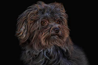Little Dogs Photograph - Elwood by Joachim G Pinkawa