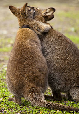 Marsupial Photograph - Embrace by Mike  Dawson