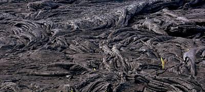 Emerging Life - Lava Field Near Pahoa Original by Lori Seaman