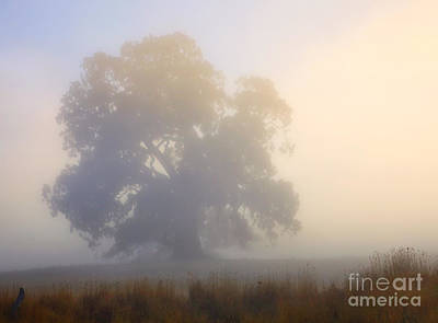 Gum Tree Photograph - Emerging by Mike  Dawson
