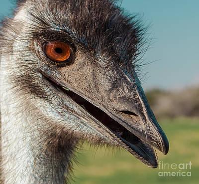 Emu Closeup  Print by Robert Frederick
