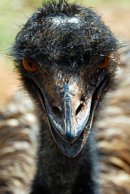 Emu Digital Art - Emu Eye Spy by Glen Johnson