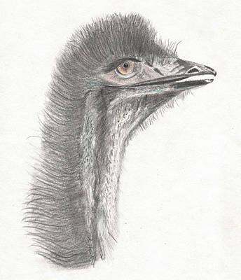 Emu Drawing - Emu Eyes by Beverley Brown
