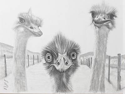 Emu Drawing - Emu Gossip by Laura Dallas