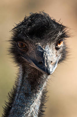 Emu Original by Marek Kocan
