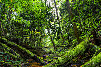 Enchanted Forest Print by Debra and Dave Vanderlaan