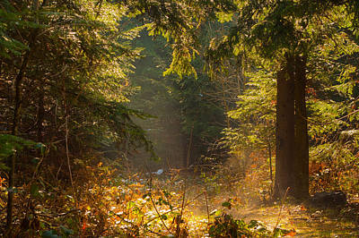 Enchanted Forest Print by Evgeni Dinev