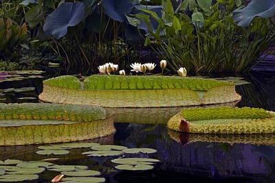 Victoria Cruziana Photograph - Enchanted Water Garden by Byron Varvarigos