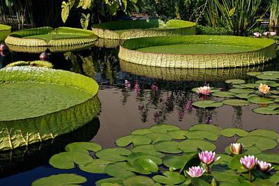 Victoria Cruziana Photograph - Enchanting Water Garden by Byron Varvarigos