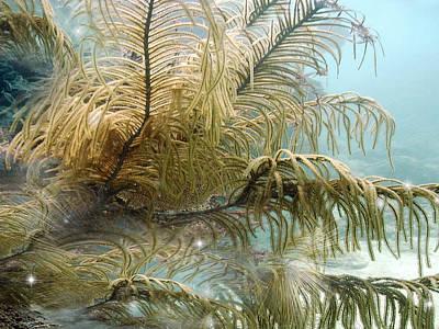 Magic Carpet Ride Digital Art - Enchantment by Phil Sadler