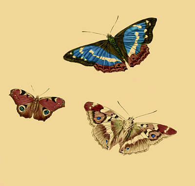 Professional Drawing - English Butterflies by Philip Ralley