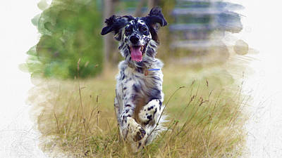 English Setter  Original by Don Kuing