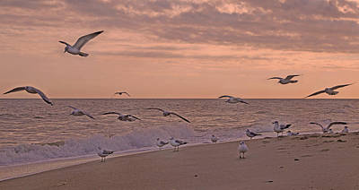 Seagull Photograph - Enjoy Your Evening by Betsy Knapp