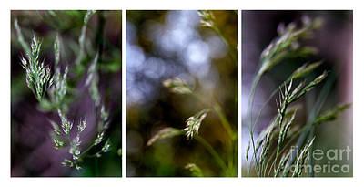 Flower Design Photograph - Ensemble by Stelios Kleanthous