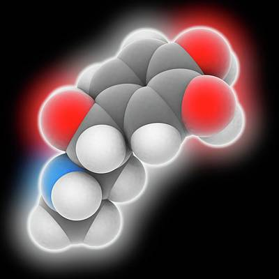 Adrenaline Photograph - Epinephrine Molecule by Laguna Design