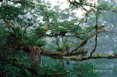 Epiphyte Photograph - Epiphytes by Gregory G. Dimijian, M.D.