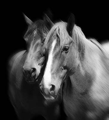 Equine Peace Print by Daniel Hagerman