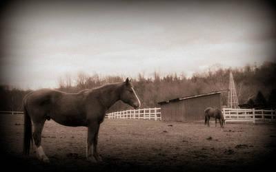 Horses Photograph - Equine Reverie by Aurelio Zucco