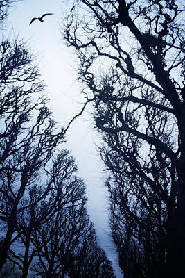 Bare Trees Photograph - Escape by Cambion Art