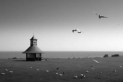 Esplended Gulls Print by David Davies