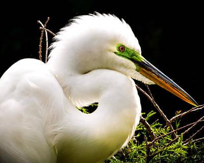 Audubon Photograph - Essence Of Beauty by Karen Wiles