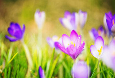 Essence Of Spring Print by Vicki Jauron