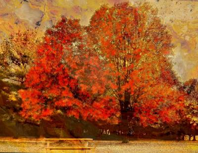Essence Of  Fall  Print by Rick Todaro