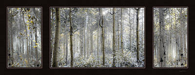Three Trees Photograph - Etheral Forest Triptych by Leland D Howard