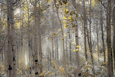 Aspens Photograph - Ethereal Autumn by Leland D Howard