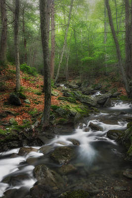 Ethereal Forest Print by Bill Wakeley