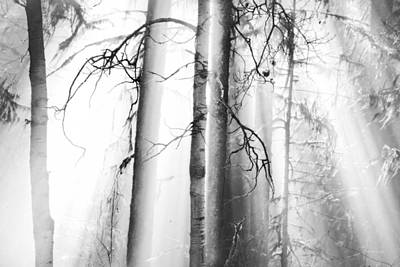 Fir Trees Photograph - Ethereal Forest by Theresa Tahara