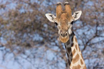 Janet Photograph - Etosha National Park, Namibia by Janet Muir