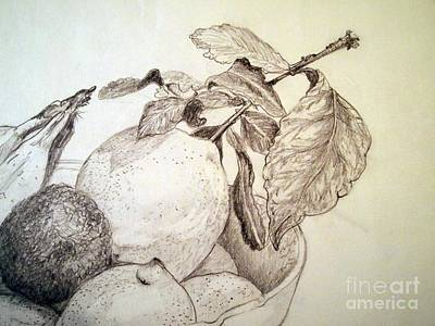 Avacados Drawing - Etude Light by Nancy Kane Chapman