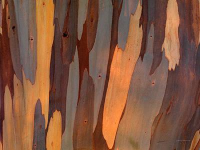 Eucalyptus Form 6 Print by Leland D Howard