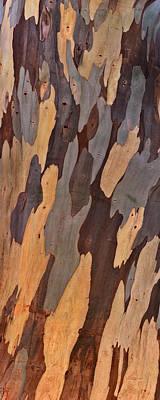 Eucalyptus Shape And Form Print by Leland D Howard