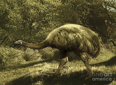 Ostrich Digital Art - Euryapteryx Flightless Bird From New by Jan Sovak